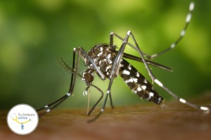 mosquitos, picaduras de mosquito, niños, bebes, mosquitera, mosquito tigre, citronella, vitaminas del grupo B.
