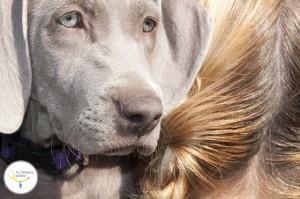 alergias en niños y bebés, animales de compañía para niños, animales domésticos y niños