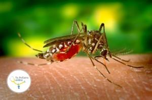 animales peligrosos, anopheles, bebés con microcefalia, Chikingunya, dengue, dengue hemorrágico, enfermedades hemorrágicas,
