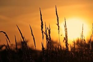 sunrise-3712483_640